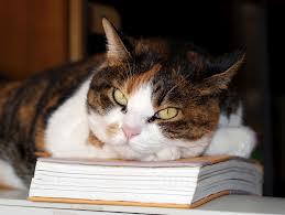 czytający kot